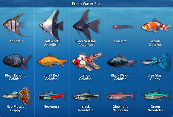 Exotic Freshwater Aquarium Fish